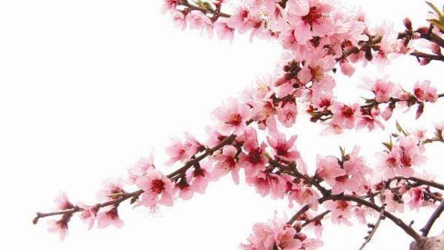 什么是烂桃花运的征兆,烂桃花都有哪些表现.jpg