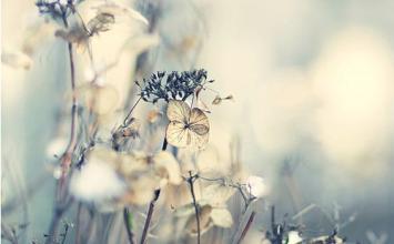 让爱情幸福美满的风水.jpg