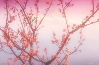 红鸾天喜是什么意思.jpg
