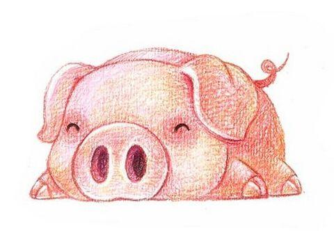 属猪的人性格