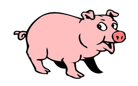 2019属猪本命年好不好