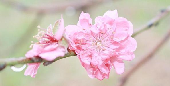 属什么的容易犯桃花劫